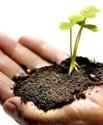 Εικόνα για την κατηγορία Κηπουρική - Αρχιτεκτονική Κήπου