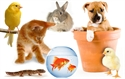 Picture for category Pet Shop